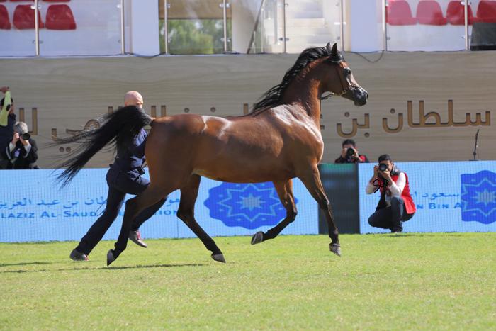 Pinga, by Mohammed Abu Haimed