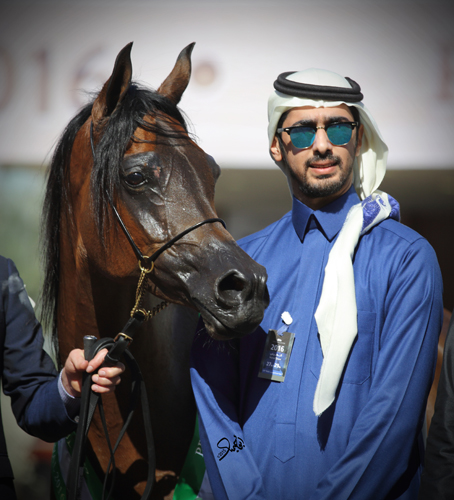 Pinga with the manager of Aljawza Stud Faisal Aljofain, by Mohammed Abu Haimed