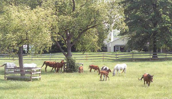 Canterbury Farm, fot. z arch. stadniny