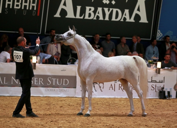 Anood Al Nasser, Gold Medal Senior Mares, by Sylwia Iłenda