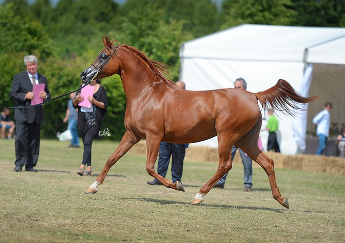 Palatina, Gold Medal Senior Mares & Best in Show, by Ewa Imielska-Hebda