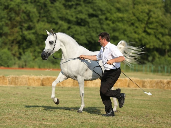 Psyche Victoria, Gold Medal Senior Mares & Best in Show, by Sylwia Iłenda