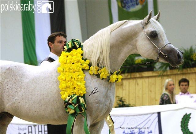 Al Lahab, Gold Champion Stallion  by Erwin Escher