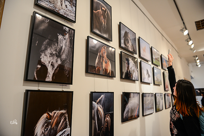 Konie: Karol Rzeczycki i przyjaciele. Wystawa fotograficzna
