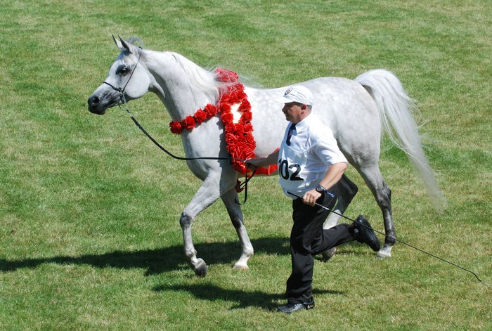 Emandoria, Senior Champion Mare and Best in Show by Mateusz Jaworski