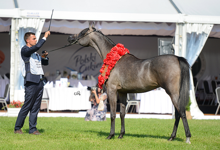 Florissima, Gold Medal Yearling Fillies, by Ewa Imielska-Hebda