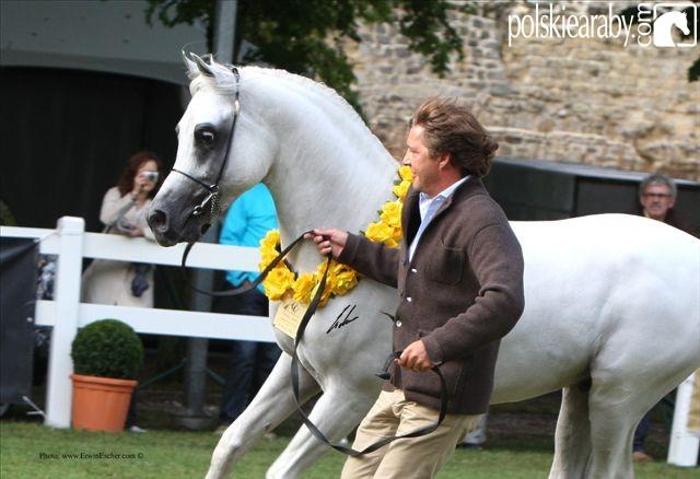 Haytham Albadeia, Gold Champion Stallion by Erwin Escher