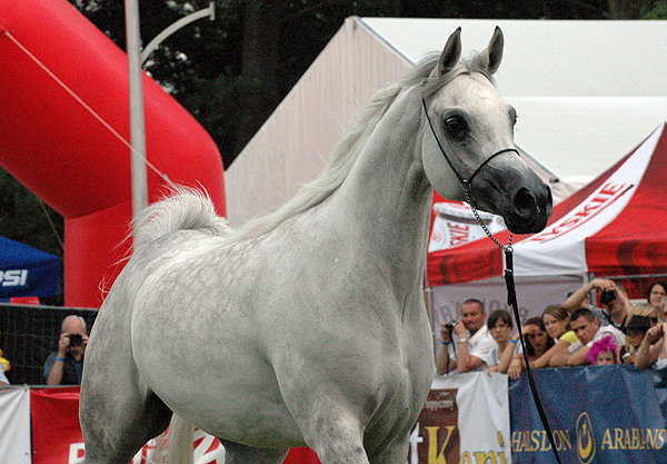 Emandoria, Senior Champion Mare and Best in Show by Katarzyna Dolińska