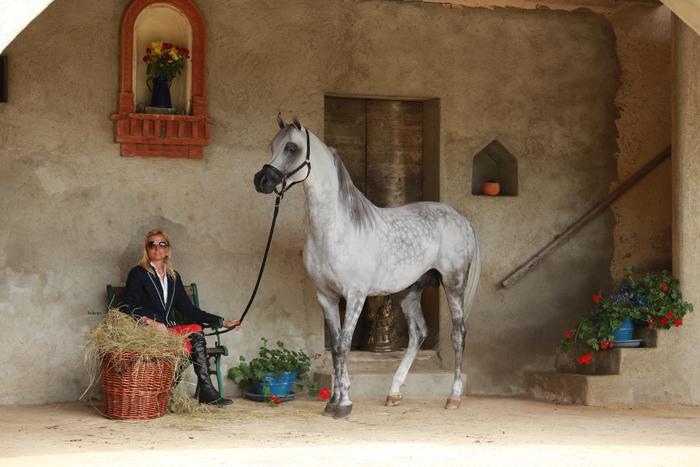 Irina Stigler and the stallion ASH Dream of Glory. Bukra Foto