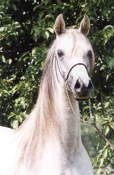 Egeria, fot. Z arch Canterbury Farm