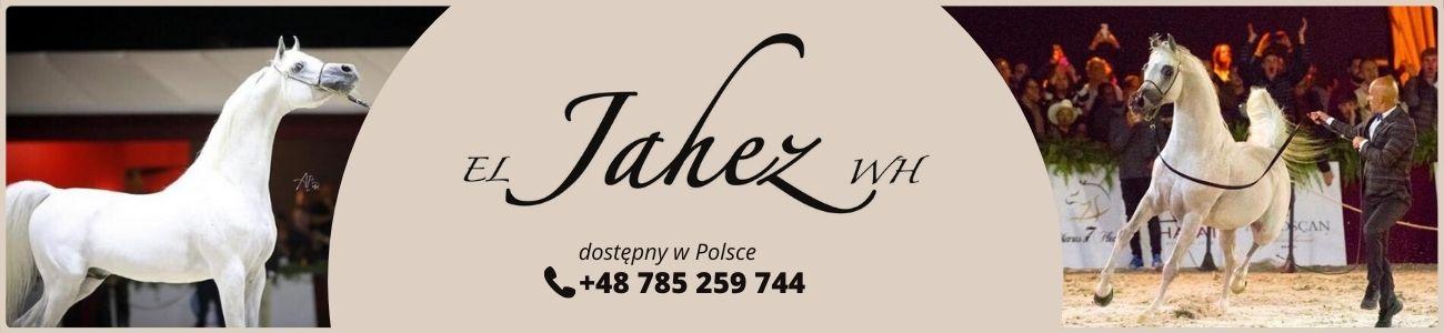 El Jahez WH dostępny w Polsce