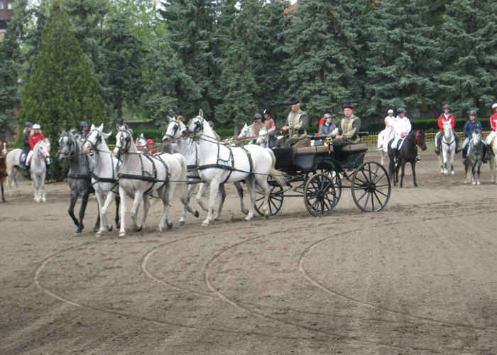 Derby Babolna (30.04-01.05.2011)