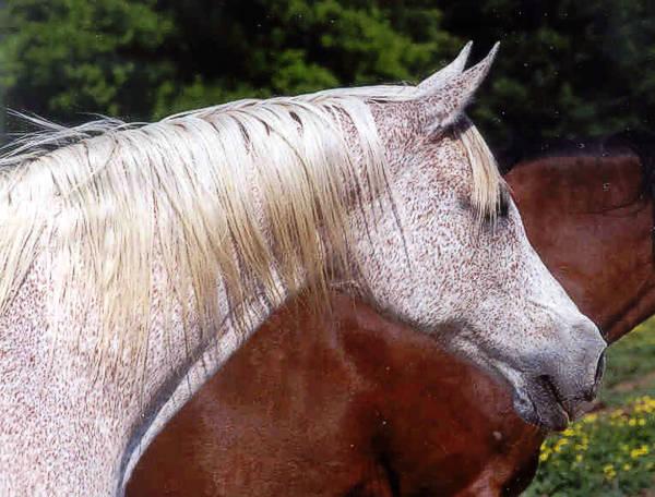 Fellana (Bandos – Felluka po Comet), fot. z arch. Canterbury Farm