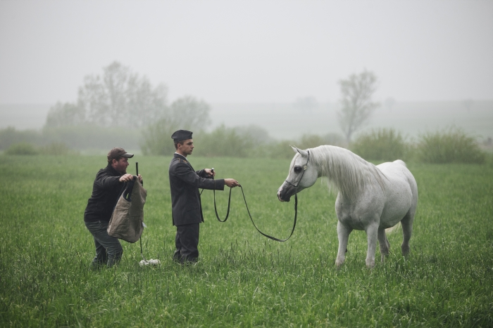 Laranda during the photo session for the 2017 Pride of Poland sale, Michałów Stud, by Tomasz Ozdoba