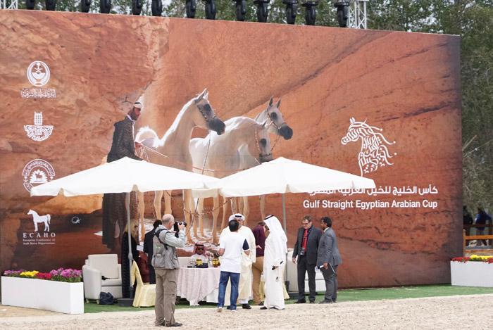 Gulf Straight Egyptian Arabian Horse Cup, fot. Monika Luft