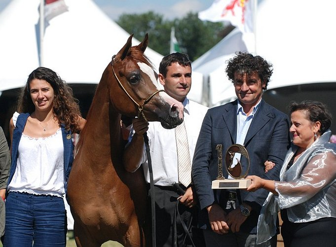 Alma Al Tiglio,  Gold Medal Junior Mares, by Mateusz Jaworski