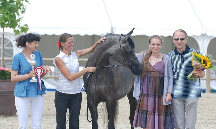 Chaos Persefona, Gold Medal Junior Mares, by Mateusz Jaworski