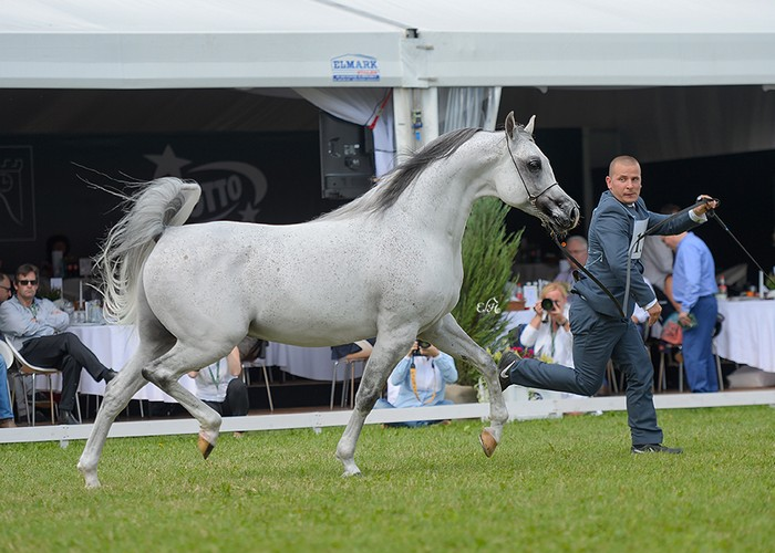 Albano, Gold Medal Senior Stallions & Best in Show, by Ewa Imielska-Hebda