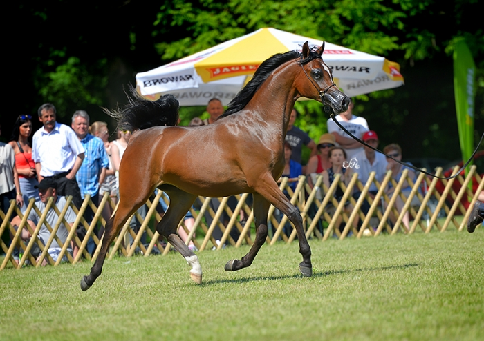Bambina, Gold Medal Yearling Fillies by Ewa Imielska-Hebda