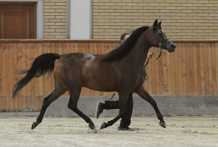 Belgica, Gold Medal Senior Mares & Best in Show, by Sylwia Iłenda