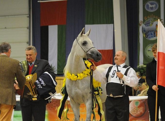 Emandoria, Gold Medal Senior Mares, by Sylwia Iłenda