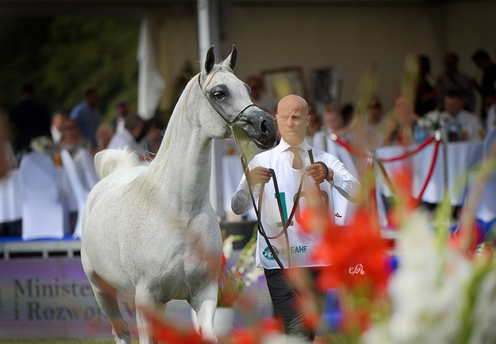 Etnologia, Gold Medal Senior Mares & Best in Show, by Ewa Imielska-Hebda
