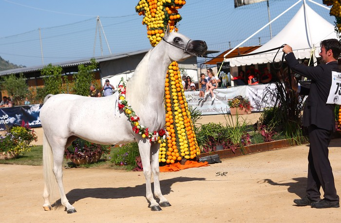 FM Gloriaa, Gold Medal Senior Mares & Best Mare, by Ricard Cunill