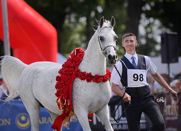 Norma, Gold Medal Senior Mares, & Best in Show, by Ewa Imielska-Hebda