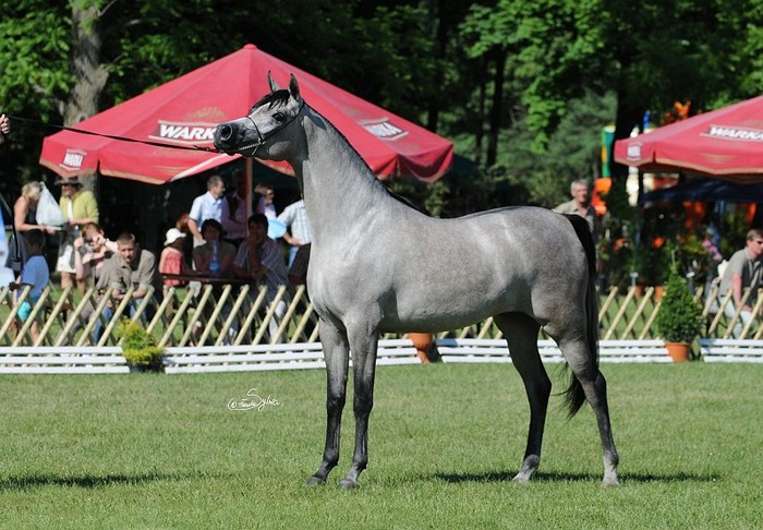 Piacenza,  Best in Show & Gold Filly, by Sylwia Iłenda