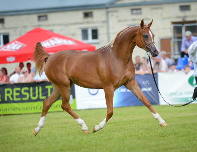 Poganinka, Gold Medal Junior Fillies & Best in Show, by Ewa Imielska-Hebda