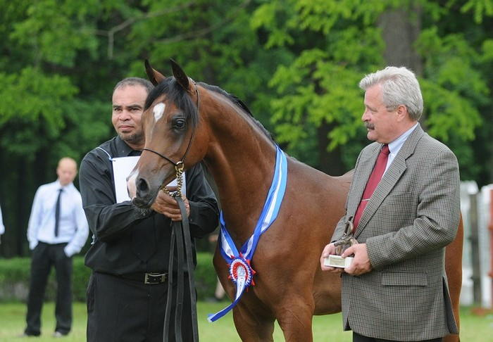 Pogrom, Champion Colt and Best in Show by Sylwia Iłenda