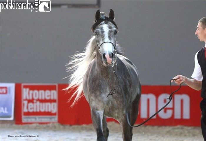 Sefora, Senior Champion Mare by Erwin Escher