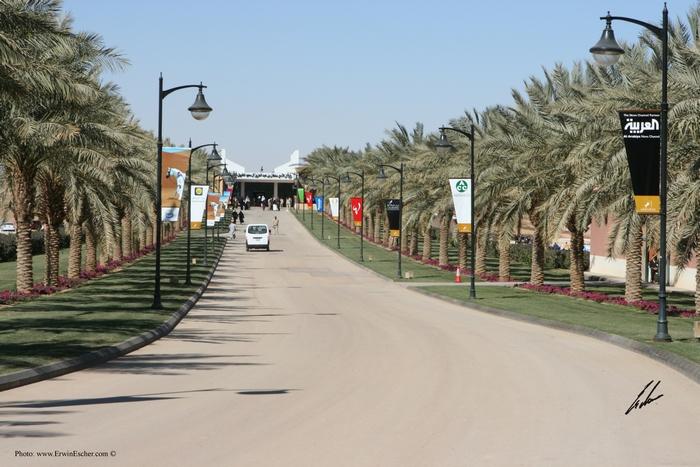 Festiwal Konia Arabskiego Al Khalediah, fot. Erwin Escher