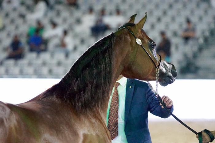 Ajadore, Asharqia Arabian Horse Classic, fot. Monika Luft