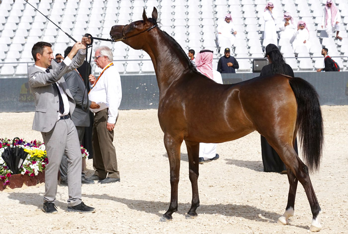 Middle East, Asharqia Arabian Horse Classic, fot. Monika Luft