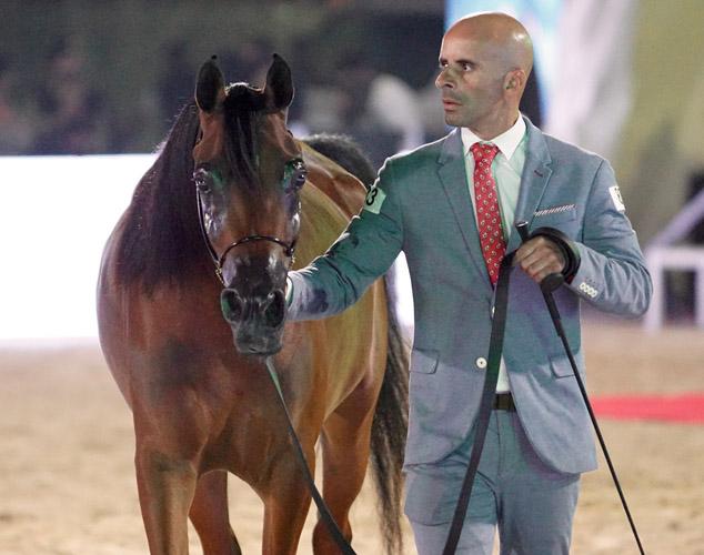 AA Layal Al Aadeyat, The Gulf Straight Egyptian Arabian Horse Cup, by Monika Luft