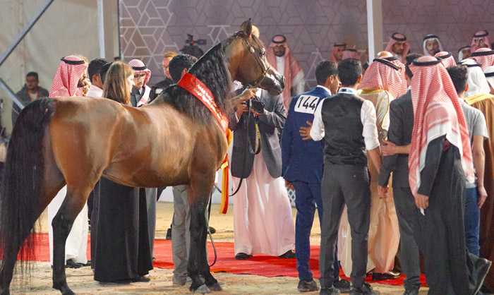 Nayiel Al Khaled, The Gulf Straight Egyptian Arabian Horse Cup, by Monika Luft