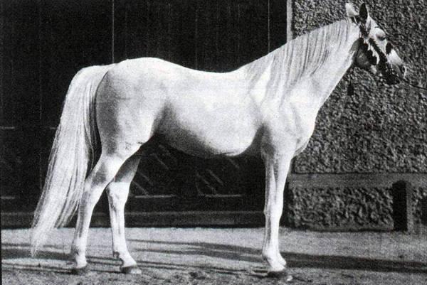Ibrahim or.ar.