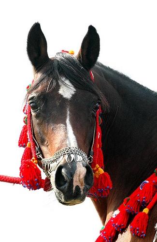 Polskie konie na niemieckich pocztówkach