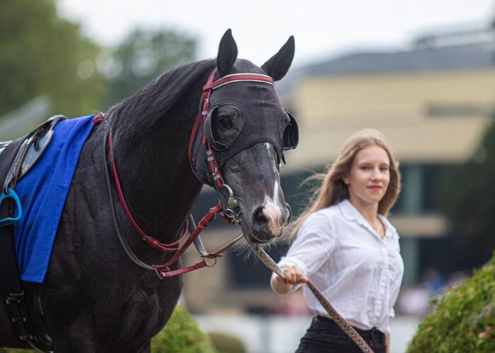 Musab przed nagrodą Derby 2020, fot. Tor Wyścigów Konnych Służewiec