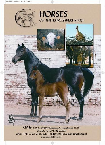 Duża transakcja na rynku koni arabskich