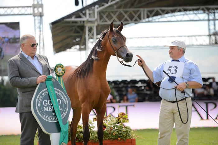 Morion, Best in Show, Al Khalediah European Arabian Horse Festival 2014. On the left Director Jerzy Białobok, on the right Mariusz Liśkiewicz. By Ewa Imielska-Hebda