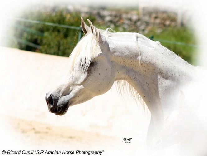 Abha Nouba, fot. Ricard Cunill