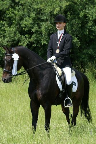 Aukcja koni arabskich na Służewcu