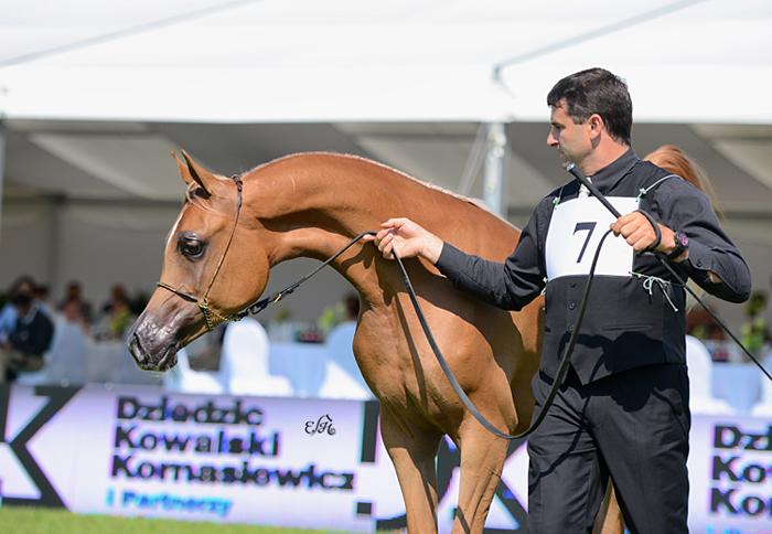 AJ Sayeda z Frankiem Spoenle. Fot. Ewa Imielska-Hebda