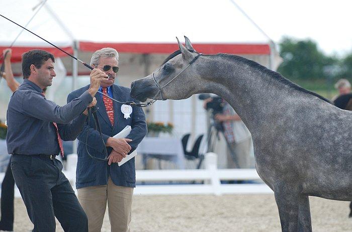 Bronze Medal Junior Fillies Al Princess Aliha from Al Hambra Arabians. Marek Trela is judging. By Mateusz Jaworski