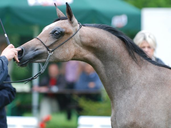 Alabama – 2nd pl. Yearling Fillies A, by Mateusz Jaworski