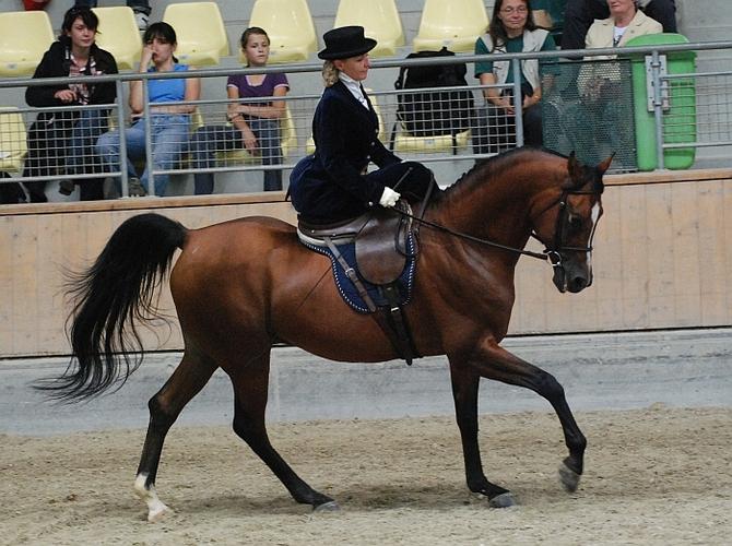 Album i Danuta Konończuk podczas klasy Ladies Side Saddle ECAHO, fot. Mateusz Jaworski
