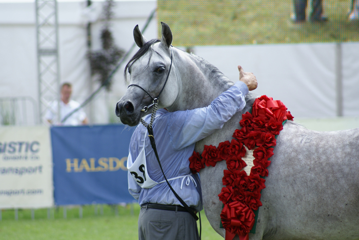 Polish National Champion Stallion Alert, by Krzysztof Dużyński