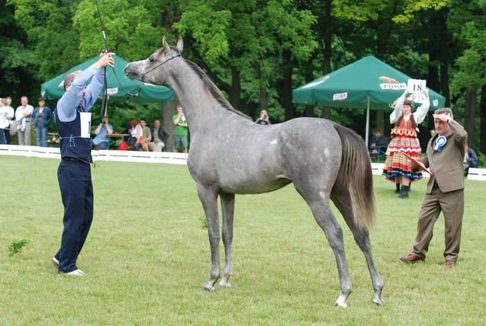 Altis – Best Yearling Colt and best private-bred colt, by Mateusz Jaworski